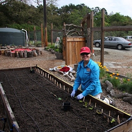 Bonnie Stephens planting the first vegetable crop of the season on Saturday, March 30, 2013