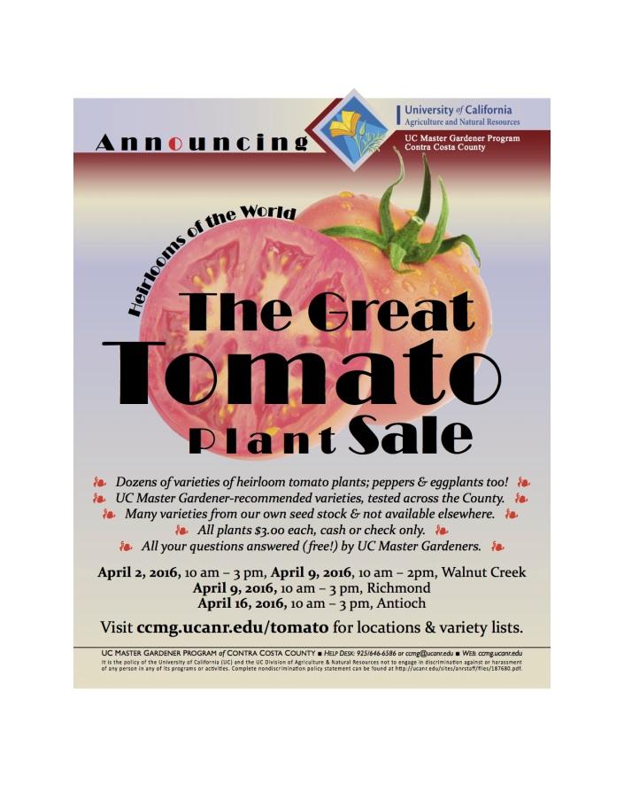 Tomatoes MG